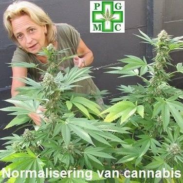 Tilburg, cannabis, thuisteelt, legaal, kweken, thuis